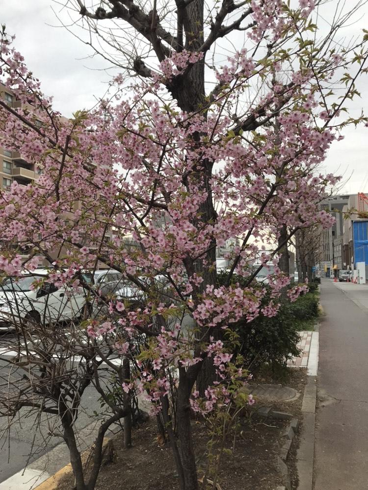 春が来ましたね…