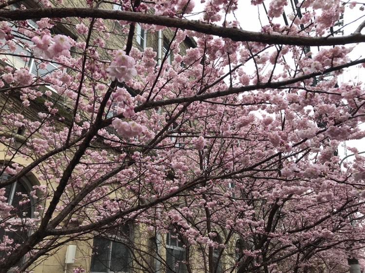 春を感じられる瞬間…