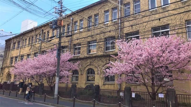 【京都一軒町屋】京都のおすすめお花見・桜スポットをご紹介します!