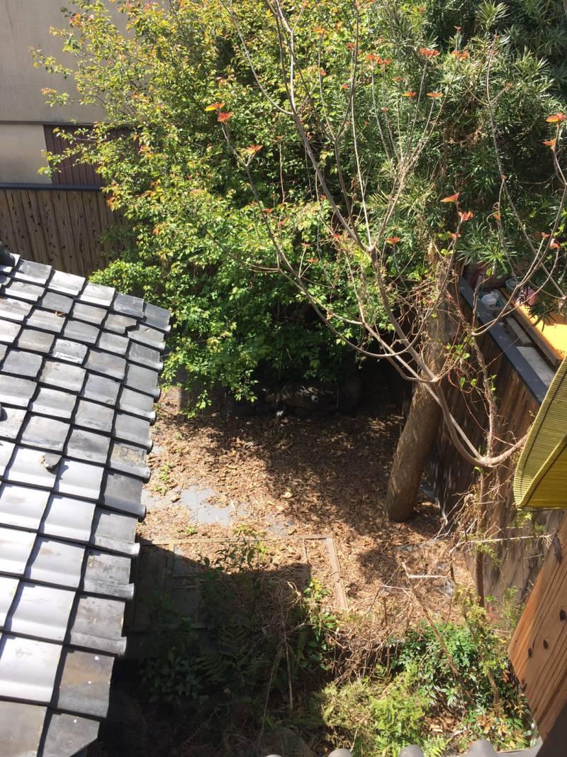 【京町家宿|染 SEN】東寺・魚美津の「庭」が綺麗になりました。