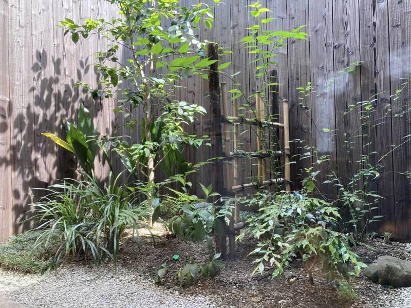 【京都市一軒貸切|町屋ホテル】染 SEN 大宮五条 はノ彩の庭を剪定しました。