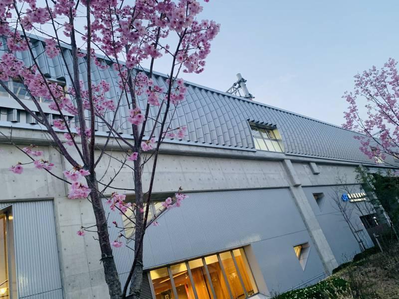 Spring Vibes #part5 Sakura near Shichijo front desk!