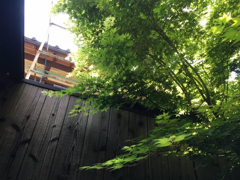 Pruning Trees at [SEN Shichijo Mibu]