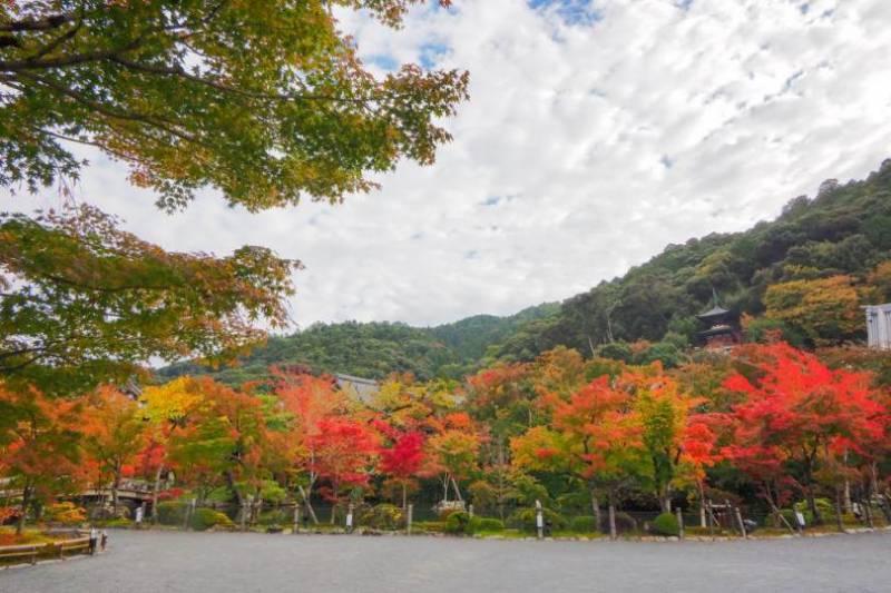 Japanese Only (https://souda-kyoto.jp/travel/koyo/index.html?idk=0000152)