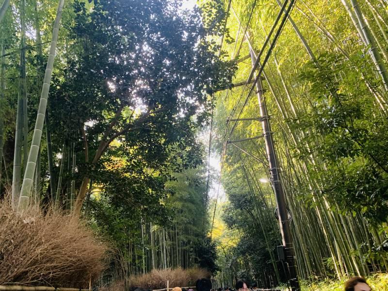 Arashiyama Bamboo's forest