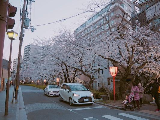 賞櫻名所PART 2 「八坂神社‧高台寺」