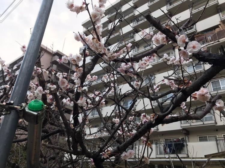 春天的腳步近了